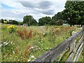 NZ1554 : Wild flowers on a vacant plot at Dipton by Robert Graham