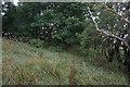 SE8454 : Chalkland Way towards Nettle Dale by Ian S