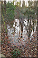 ST6254 : Flooded footpath, Rush Hill Wood by Derek Harper