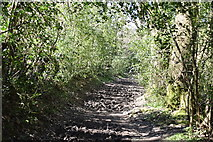 TQ5640 : Muddy footpath by N Chadwick