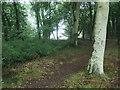 TF7942 : Path through beech woodland by Christine Johnstone