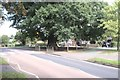 SK9237 : The Grantham Oak by Bob Harvey