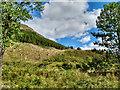 NN2405 : Glen Croe hillside by Mick Garratt