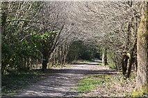 TQ5738 : Tunbridge Wells Common by N Chadwick