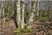 TQ5638 : Ramslye Wood by N Chadwick