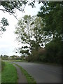ST6799 : Some mistletoe in September by Neil Owen