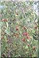 TF0820 : Red teardrops by Bob Harvey
