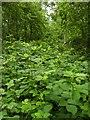 TF0820 : A sea of undergrowth by Bob Harvey