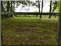 SJ7387 : The moss lawn at Dunham Massey by Stephen Craven