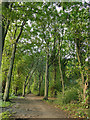 SE2431 : Lime avenue in Farnley Hall Park by Stephen Craven