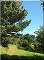 SX9049 : Path near Brownstone Battery by Derek Harper