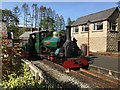 SH6541 : Blanche at Tan-y-Bwlch by Richard Hoare