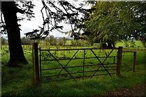 H5672 : Rusty gate, Mullaslin by Kenneth  Allen