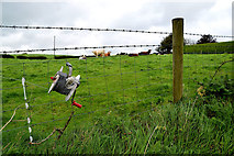 H5572 : Electric fence, Mullaslin by Kenneth  Allen