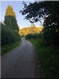 SJ9470 : Bollinhead Lane near Brindhurst Farm by Philip Cornwall