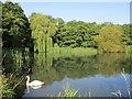 NS7355 : Pond on the South Haugh, Hamilton by Alan O'Dowd