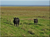 TF4548 : Two black cows beyond the sea bank by Neil Theasby
