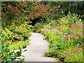SJ7387 : Autumn in Dunham Massey Garden by David Dixon