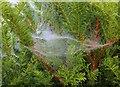 NN0777 : Spider web by Bill Kasman
