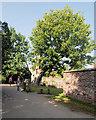 SJ7387 : Ancient Oak Tree at Dunham Massey by David Dixon