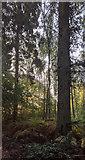 TF0820 : Woodland glories by Bob Harvey