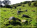 SU1467 : An afternoon at Lockeridge Dene and Piggledene (4) by Brian Robert Marshall