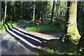 H4881 : Triple tree shadows, Gortin Glens Forest Park by Kenneth  Allen