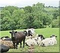 SO0430 : Brecon - Pastoral Landscape by Colin Smith
