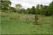 TQ5940 : Wetlands, Grosvenor Grounds by N Chadwick