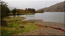 NM7479 : Loch Ailort by Mick Garratt