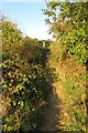 SP3634 : Footpath goes up the bank by Philip Jeffrey