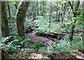 NZ0956 : Woodland stream by Robert Graham