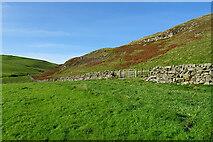 NX1894 : Drystane Dyke by Anne Burgess