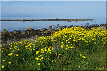 NX1289 : Roadside Flowers by Anne Burgess