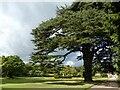 ST2885 : The Cedar Garden, Tredegar House by Robin Drayton