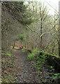 SE3461 : Bridleway, Warren Covert by Derek Harper