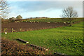 SE3261 : Sheep and pasture by Warren Lane by Derek Harper