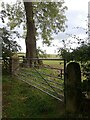 NY9659 : Gateposts, old and new by Charlotte Tagart