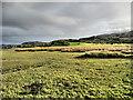 L9482 : Island Peninsula by kevin higgins