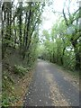 SX5264 : West Devon Way in woodland south of Clearbrook by David Smith