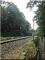 SX5157 : Plym Valley Railway by the West Devon Way by David Smith
