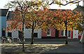 SX7960 : Cherry trees, Rotherfold, Totnes by Derek Harper