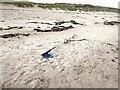 NZ2796 : A strange bit of flotsam on Druridge Beach by Oliver Dixon