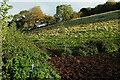 SX9069 : Field above Lower Rocombe by Derek Harper