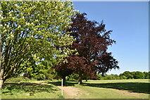 TQ6045 : Tunbridge Wells Circular Walk, Somerhill Park by N Chadwick