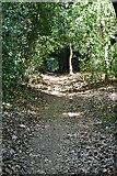 TQ6145 : Tunbridge Wells Circular Walk, The Toll by N Chadwick