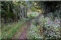 NT6419 : Borders Abbeys Way south of Jedburgh by Jim Barton