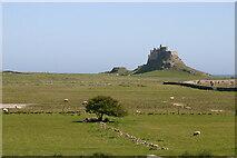 NU1341 : Lindisfarne Castle by Peter Jeffery