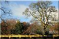 SE2955 : Trees and bushes, Valley Gardens by Derek Harper