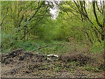 SK5952 : Track in Sansom Wood by Alan Murray-Rust